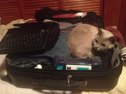 Grace hoping to get packed on my next trip